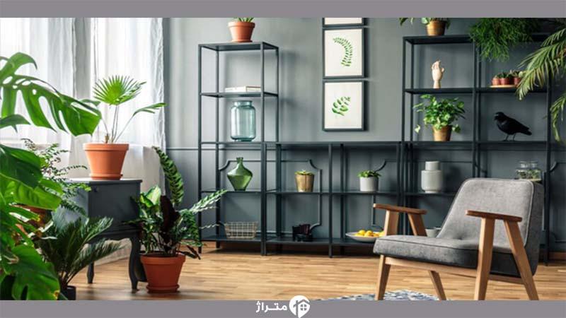 با این گیاهان آپارتمانی از آلودگی هوا در زمستان در امان بمانید